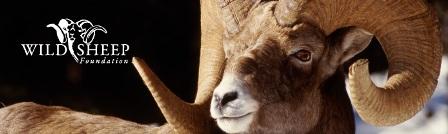 45570-wild_sheep